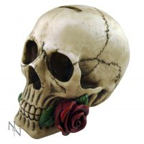 Argentine Skull persely